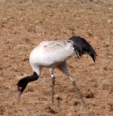Crane named