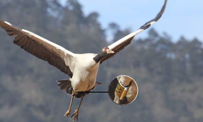 crane GPS_UWICE