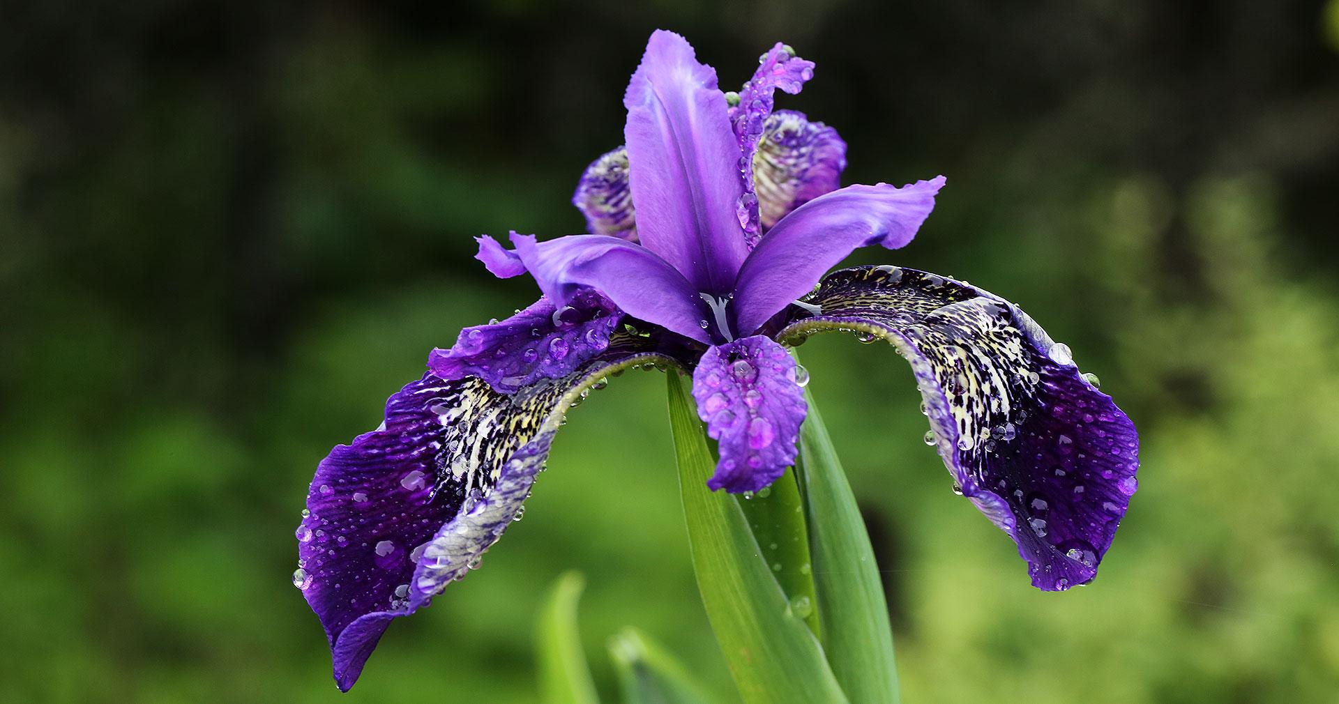 flower_111-1